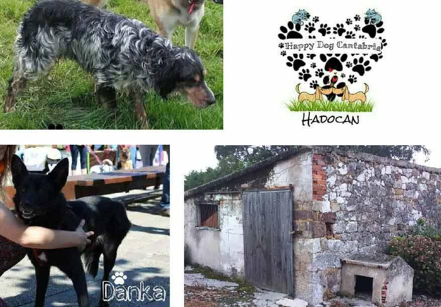 Mosaico-hadocan-1