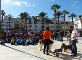 hope-animals-cajita