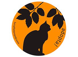 gatos-seniors-cajita