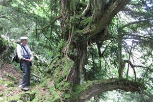 bosque-amable-cajita