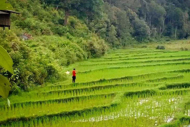 experiencia-tailandia-3