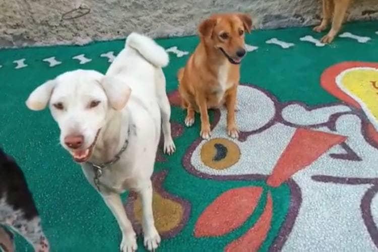 bali-the-dog-3