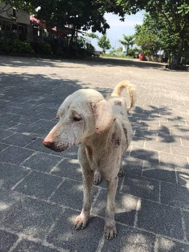 bali-the-dog-4