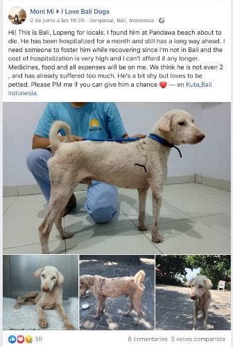 bali-the-dog-5